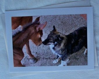 Photo Card Baby Horse and Puppy, Foal Oakley and Maggie
