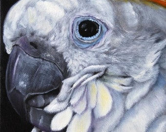 Yellow Crested Cockatoo Fine Art Giclee Print