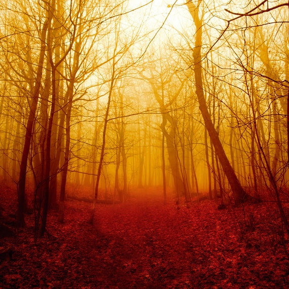 Country photography, harvest gold, blood red, foliage, red forest, rustic decor for a cabin, bare trees, spooky, men, hiking