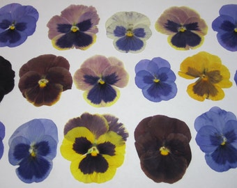 Dried Pressed Flowers for Crafting - Real  pansies mix