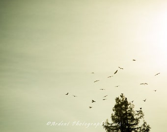 Birds in Flight Warm Sunset Light Room Decor Wall Art Photography Blue Crows Tree - On the Move