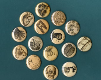 Vintage Anatomy 1 inch Pinback Buttons set of 6 assorted