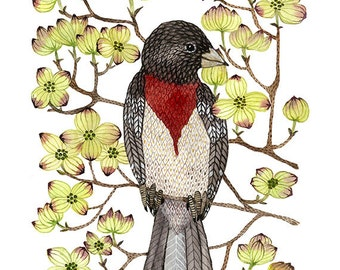 rose breasted grosbeak print,  dogwood tree, dogwood flowers, spring botanicals, bird art giclee print