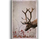 Reindeer Card -FREE SHIPPING -Winter Woodland -Old Christmas Card -Deer Card -Nature Holiday Card Set -Xmas Card -Colorado Cards
