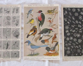 "NATURE- Flowers, Birds, Snowflakes -antique prints from ""Book of Knowledge"" 1912 (3 sheets/6 pages)"