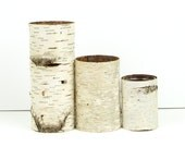 Collection of 3 birch bark vases