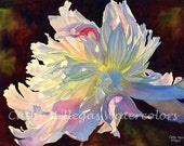 White Peony art watercolor print of original painting by Cathy Hillegas, 8x10, watercolor print, white, pink, yellow, blue red, giclee