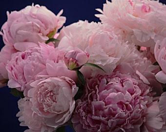 Photograph Peony Sarah Bernhardt Nature Floral