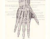 1899 Human Anatomy Print - Tendons and Arteries of Hand - Vintage Antique Medical Anatomy Art Illustration for Doctor Hospital Office