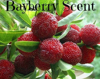 BAYBERRY Scented Soy Wax Melts - Soy Tart -  Popular Christmas Scent - Wickless Candle - Hand Poured - Highly Scented - Handmade In USA