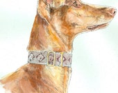 PHARAOH HOUND Original Watercolor on Ink Print 11x14 Matted Ready to Frame