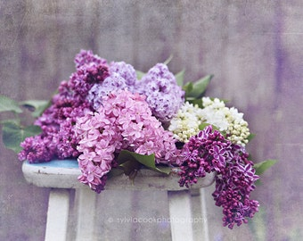 Lilac photograph, fine art print, flowers, purple, spring, pastel photograph,Shabby chic decor, floral photography