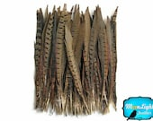 "Pheasant Tail Feathers, 10 Pieces - 12-14"" NATURAL Ringneck Pheasant Tail Feathers : 3291"