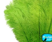 "Ostrich Feathers, 10 Pieces - 8-10"" LIME GREEN Ostrich Dyed Drabs Body Centerpiece Party Feathers : 3940"