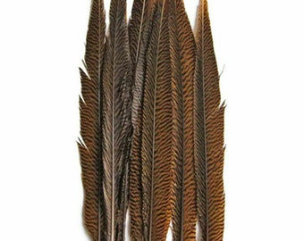 "Wholesale Tail Feathers , 50 Pieces - 20-25"" Natural Golden Pheasant Tail Wholesale Feathers (bulk) : 3290"