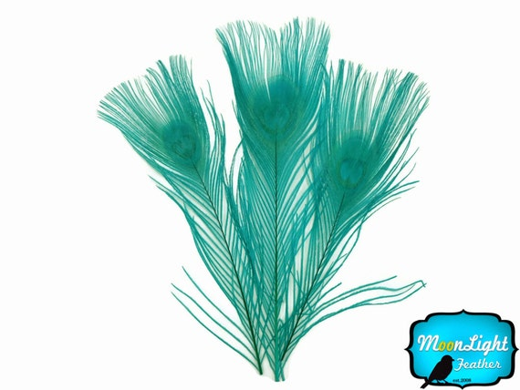 Peacock Blue Feathers, 5 Pieces - PEACOCK GREEN Bleached and Dyed Tails Peacock Feathers : 1403