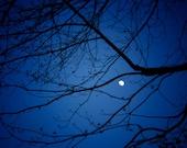 Moon photograph-fine art print, dreamy nighttime photograph,black branches, deep blue, moonlight , spring night, wall decor