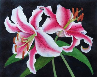 stargazer lilies giclee print of original watercolor