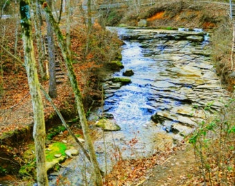 Lonely Little Creek in the Woods Art Print Wall Art Home Decor Office Decor