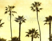 CALIFORNIA DREAMING, Fine Art Photography, Palm Trees, Sunset, Cool, 12x18, 16x24,Ocean, Green Tones, Yellow, Beach Cottage Chic, Rustic Art