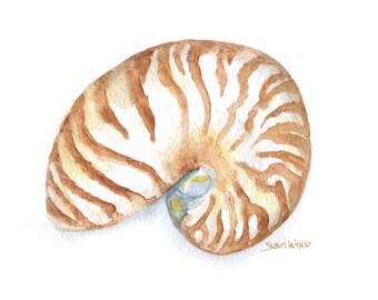 Nautilus Watercolor Painting - 5 x 7 - Giclee Print - Beach Summer Painting - Seashell