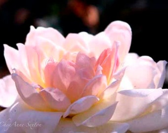Rose Photography soft pink pale yellow Can't You Just Smell This Rose - photographic print 8x12