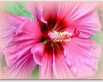 Hibiscus Flower Collectible Print, Vibrant and Colorful...