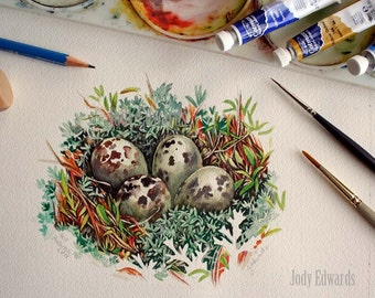 Shorebird Nest - Original Watercolor painting of a nest with four eggs