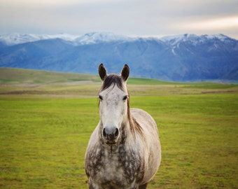 Colorful Horse Photograph, White Horse in the Mountains