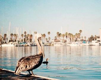 Coastal Wall Art, Pelican Photograph, Harbor Boats, Blue Coastal Wall Decor, Beach House, Ventura Harbor