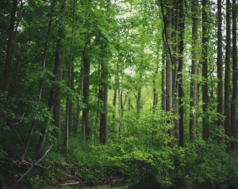 Forest - 8x10 Fine Art Photograph, Wall Art, Room Decor, Woods, Trees, Nature
