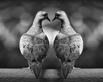 Dove Love Birds Romancing with Heart Shape No.0100BW A Mourning Dove Black & White Fine Art Bird Photograph