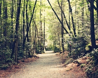 Mountain Path - Landscape Photograph- Nature - Trees - Green- Woods