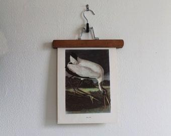 Vintage 1950s Audubon Birds of America Bookplate Print - Wood Ibis