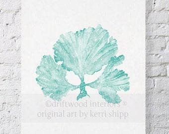 Seaweed II in Woodlawn - NEW colour