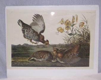 Vintage John Audubon Print, Pinnated Grous, Birds, Woodlands