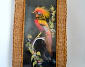 Vintage Distressed Souvenir  of Feather Art Colorful Bird  with Hand painting under glass Basket Tray