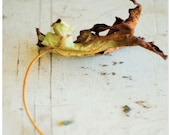 Leaf photograph, leaf, autumn, back to school, thanksgiving, Quintessential Fall, fine art print