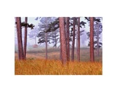 """Landscape Photography of Pine Trees - """"Field Pines and Fog"""""""