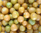 SALE Pineapple Ground Cherries Mollys Organically Grown Heirloom Seeds RARE