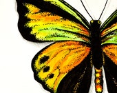 Goliath Butterfly - Original Watercolor and ink painting