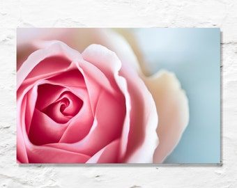 rose photograph flower photo fine art photography wall decor nature nursery art floral valentine love garden
