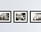 Black and White Nature Photography Set, Three Botanical Prints, 11x14, 8x10, 5x7, dark grey gray modern fine art photographs branch wall art