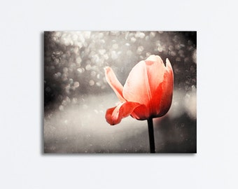 """Canvas Gallery Wrap - red orange tulip black brown wrapped canvas flower photography nature wall art large photograph, """"Drinking in the Sun"""""""