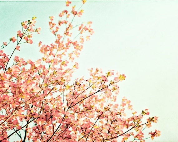 """Spring Photography - peach mint green dogwood tree branches nature nursery wall art print shabby chic pastel photograph, """"A May Morning"""""""