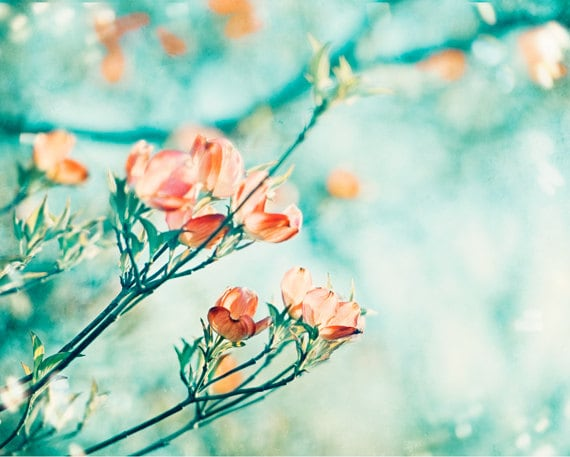 Coral Turquoise Photography flower aqua orange teal peach