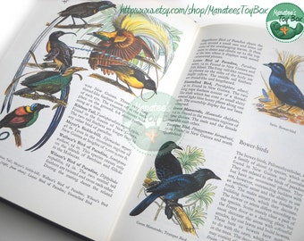 Beautiful Vintage Bird Book: 1960s Birds of the World Book in Color by Hans Hvass