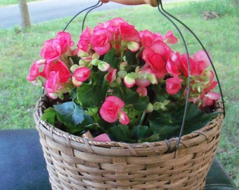 Art Photograph Coral Floral Basket In Country Authentic Home