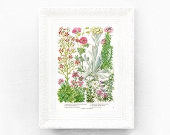 6x9 Vintage Wildflowers Botanical Print Encyclopedia Illustration Pink Green Wildflower British Educational Learning flower botWF