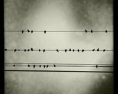 Bird on wire print, square print, black and white photo, 4x4 or 8x8, square photo